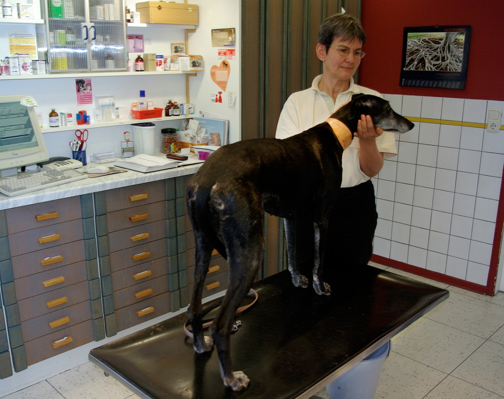 Willkommen in der Tierarztpraxis Bossow in Hoya